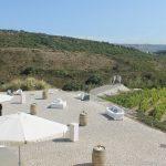 Vineyard Wedding Venue (18)