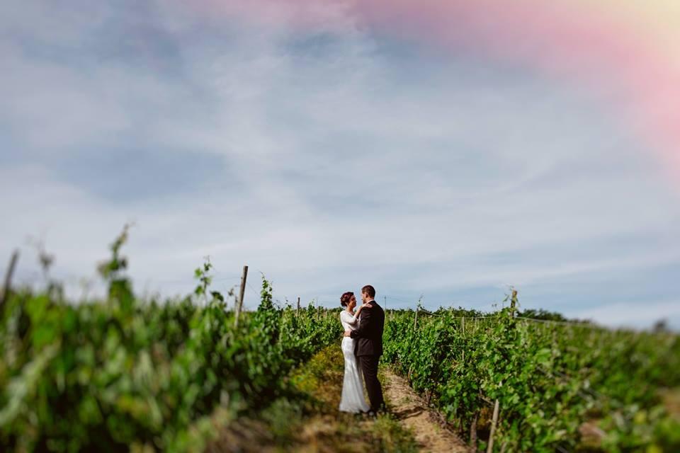 Vineyard Style Wedding